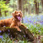 Attrezzatura Trekking per il cane: l'elenco completo