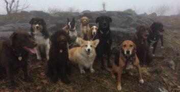Dog hiking! Servizio per cani di New York - Attrezzatura Trekking